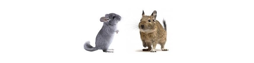 chinchilla et degu